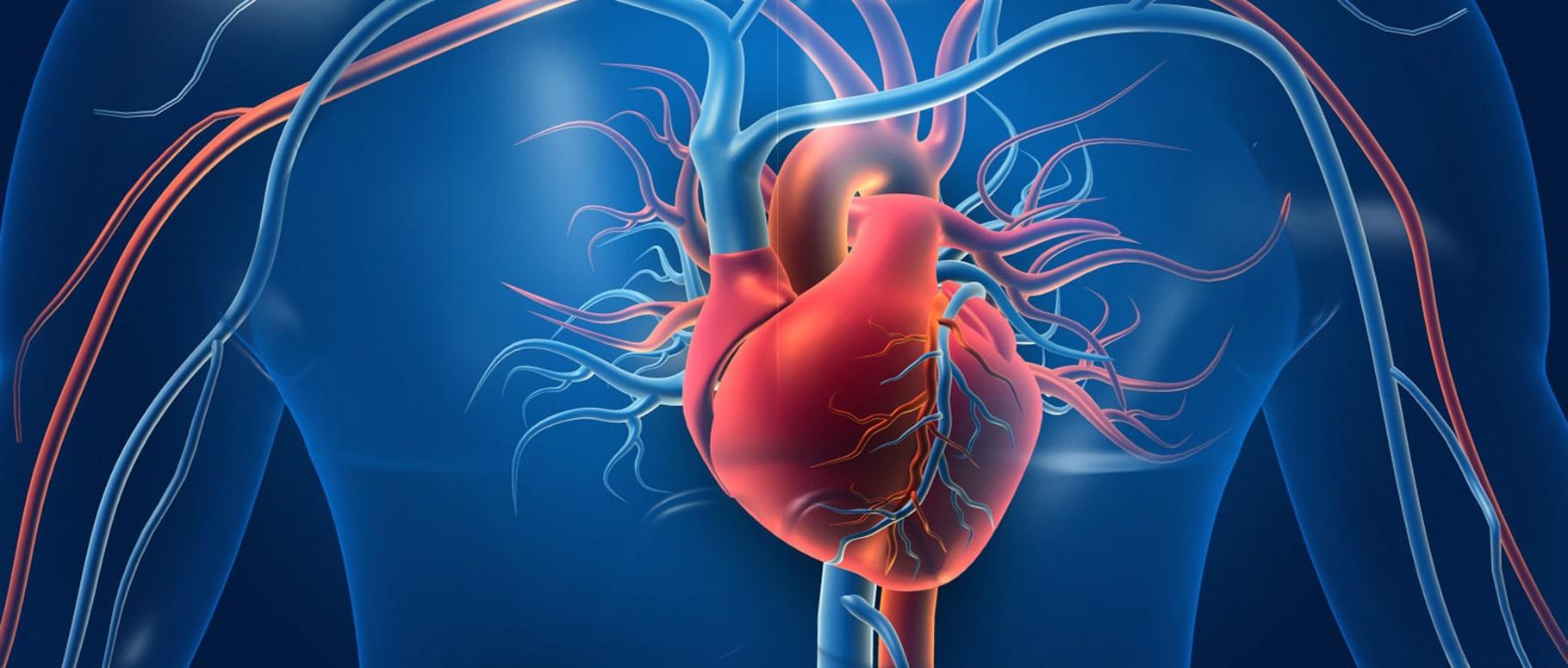 сердце, сердечная недостаточность